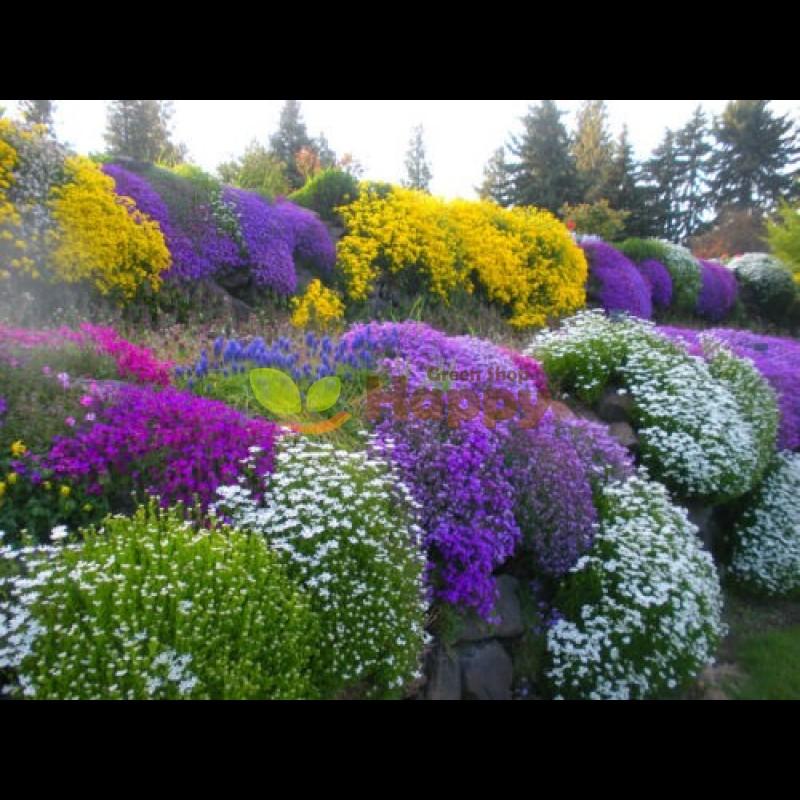 1sqm ROCKERY ROCK GARDEN FLOWER MIX 0.5 g HIGH QUALITY FLOWER SEEDS //1247