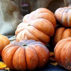Pumpkin 'Muscade De...