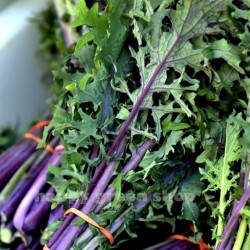 Kale 'Red Russian' - 700 seeds