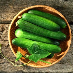 Cucumber 'King of salad' -...