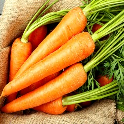 Carrot 'Nantes 2' - 6 m...