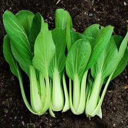 Chinese cabbage 'Pak choi'...