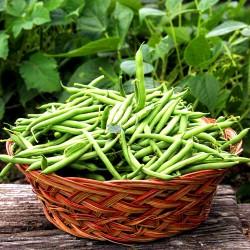 French bean 'Spirit' - 100...