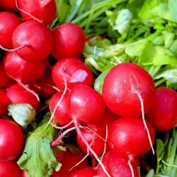 Radish 'Cherry' - 5m Seed...
