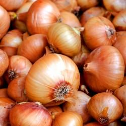 Onion 'Supra' - 6m seed...