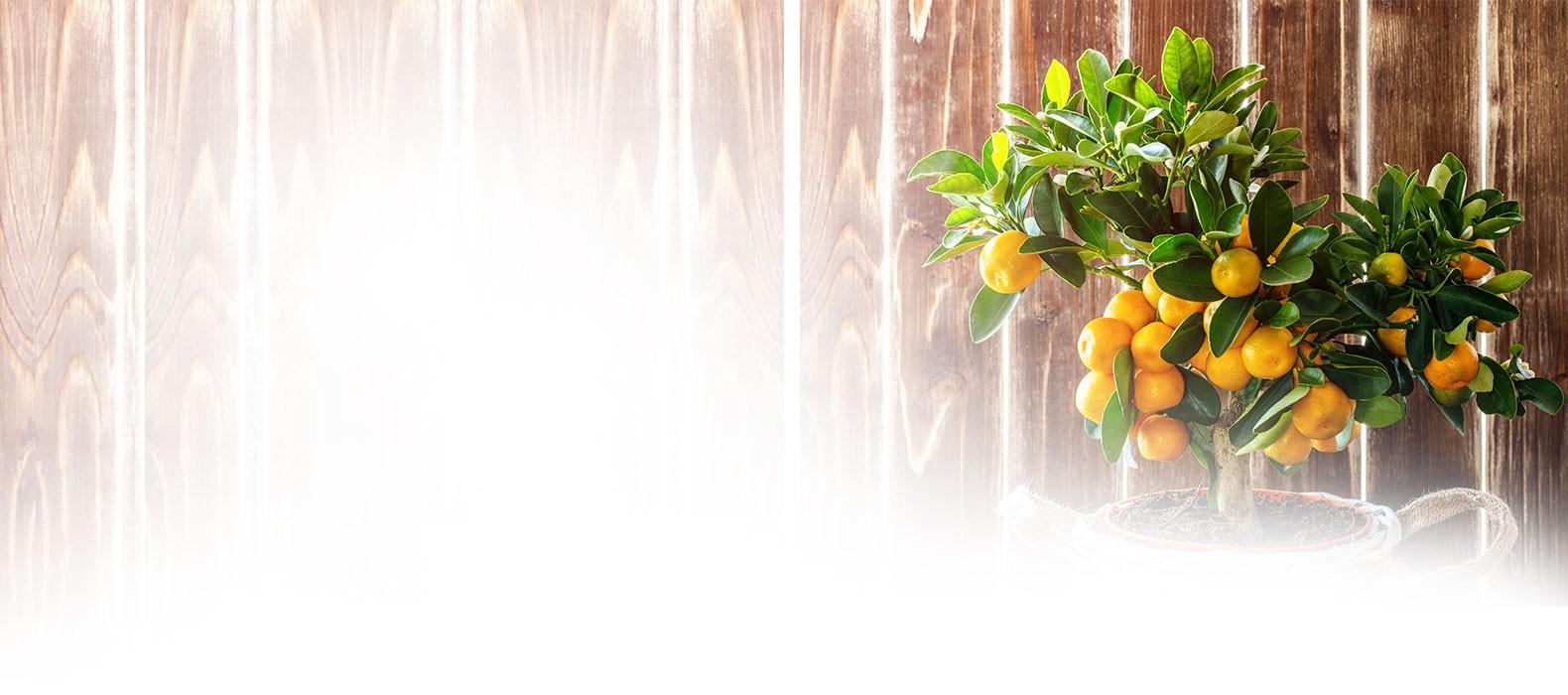 tropcial-plants